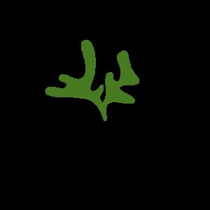 Mulder Asparagus logo meer witruimte - kopie (1)
