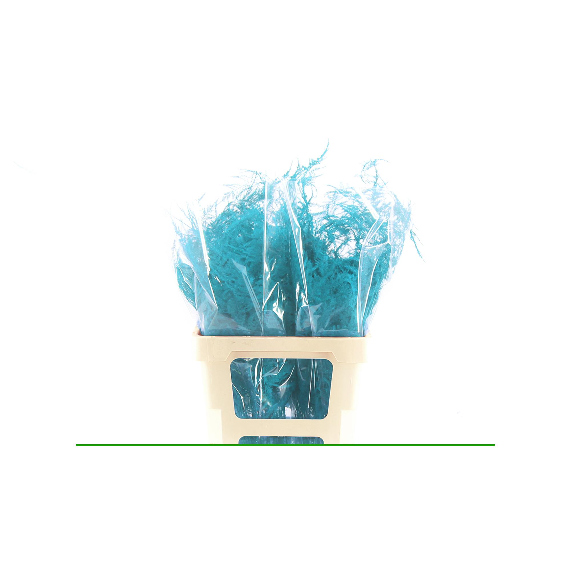 Uitsnede-Specials-Blauw