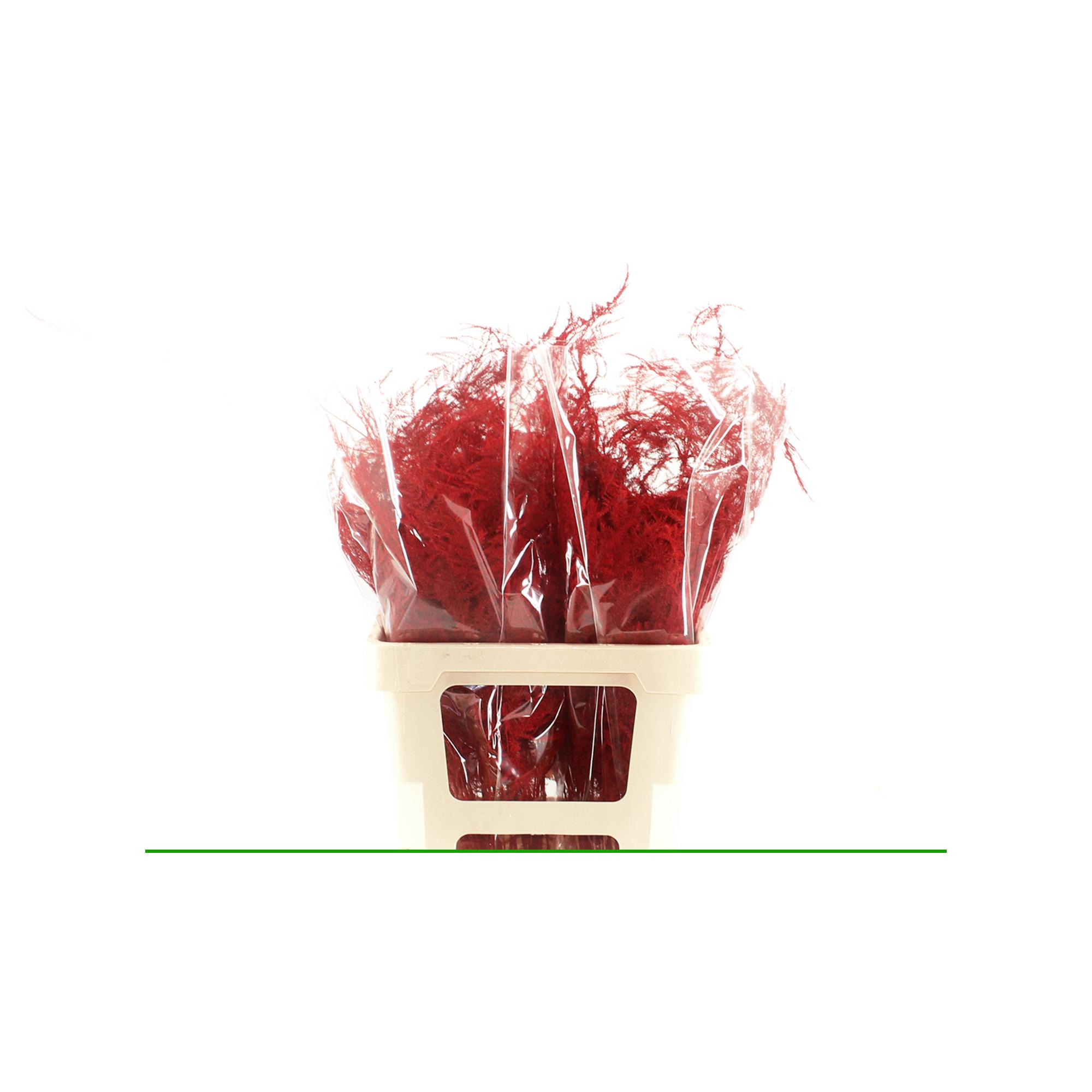 Uitsnede-Specials-Rood
